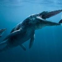 Mosasaurs (Mosasauridae).jpg