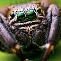 Spiders (Araneae).jpg