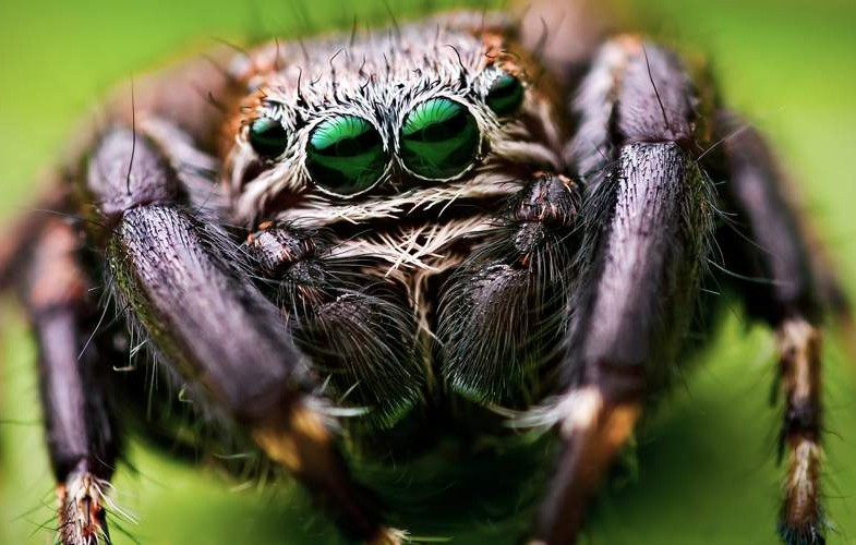 Image result for Biggest Spider in the World