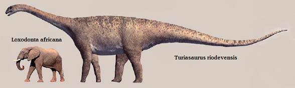 Turiasaurus (Turiasaurus riodevensis)
