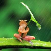 Frog (Anura).jpg